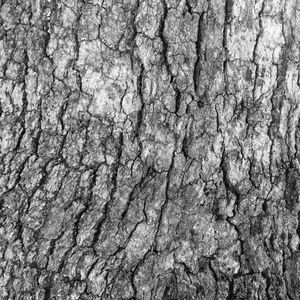 Abstract Black & White Photo Wall Art Tree Bark 4